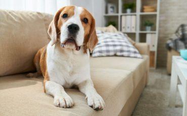 ensinar o seu cachorro a fazer as necessidades no lugar certo