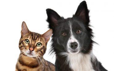 expectativa de vida de cães e gatos