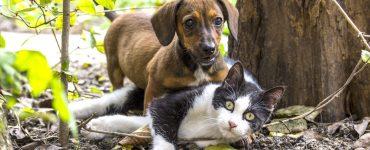 Piometra em Cães e Gatos
