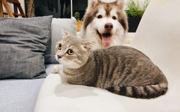 Dermatite em pets