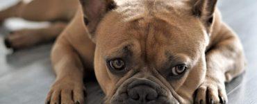 otite-canina-o-que-e-causas-e-como-identificar