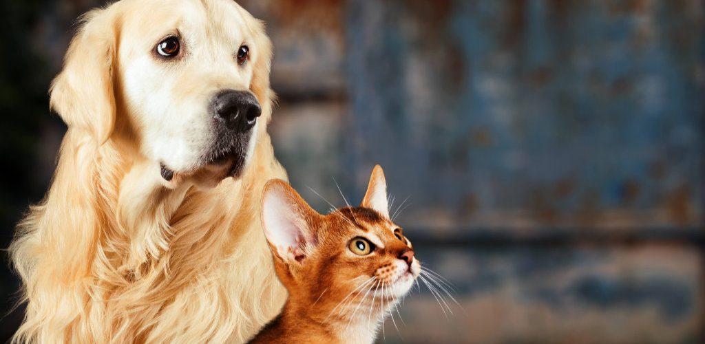 Vacinação em cães e gatos