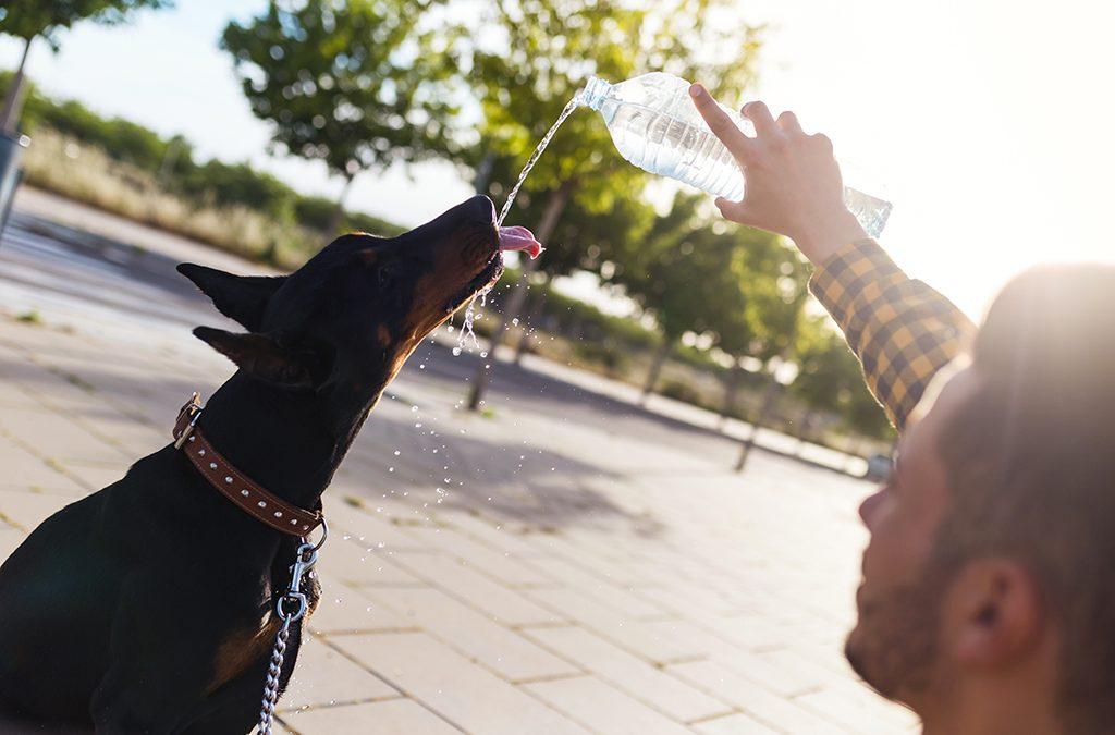 Cuidados com seu pet no verão