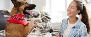 Enriquecimento ambiental para cães e gatos.