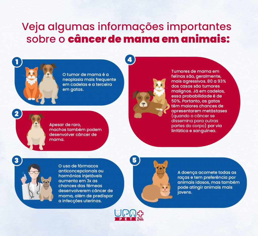 Infográfico câncer de mama em animais